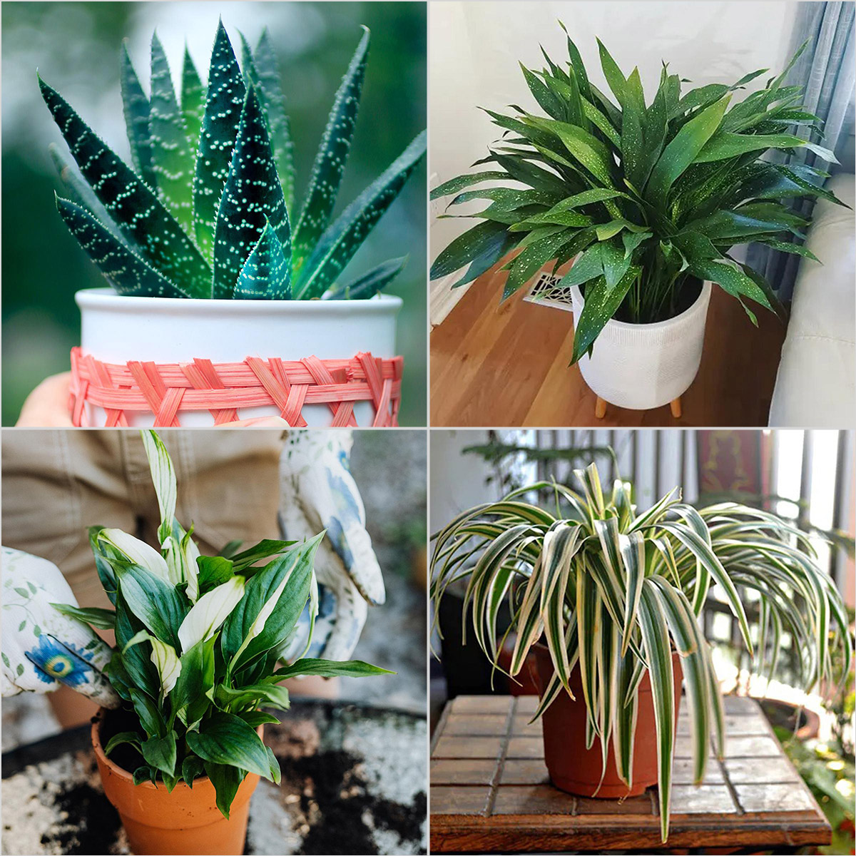 Top 10 Plants Ideas for Your Bathroom